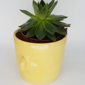 yellow ceramic planter pot